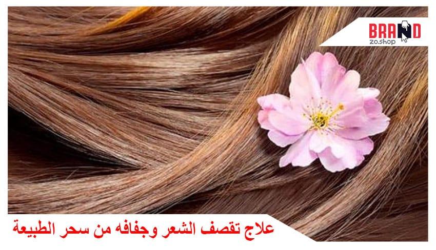 علاج تقصف الشعر وجفافه من الطبيعة
